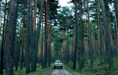 Se adentran en el bosque